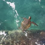 World Endangered Species Day: 7 ways to help from home